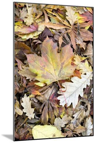 Autumn Leaves-Jon Stokes-Mounted Photographic Print