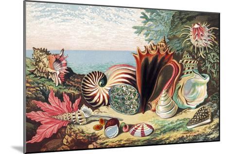 Sea Shells-Sheila Terry-Mounted Photographic Print
