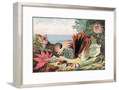 Sea Shells-Sheila Terry-Framed Art Print