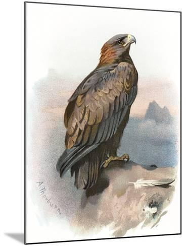 Golden Eagle, Historical Artwork-Sheila Terry-Mounted Photographic Print