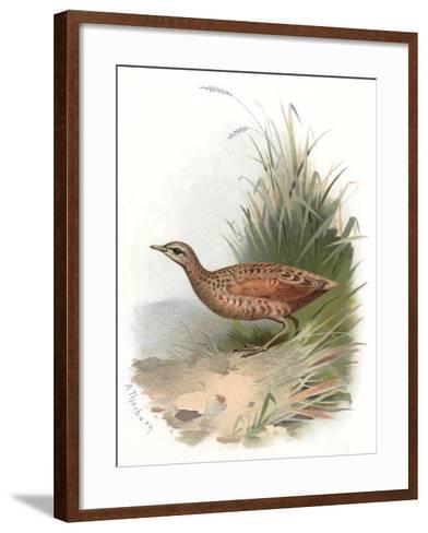 Corncrake, Historical Artwork-Sheila Terry-Framed Art Print