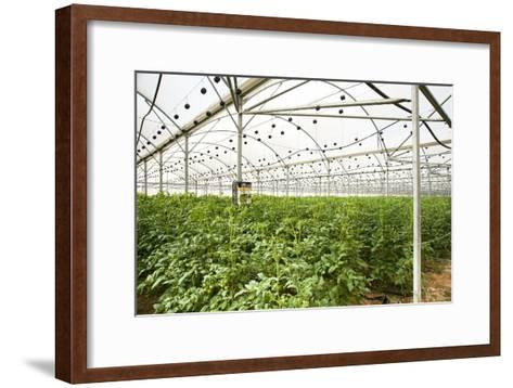 Interior of a Greenhouse--Framed Art Print