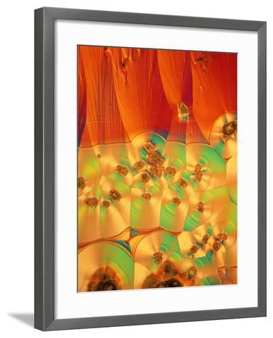 Vitamin C Crystals--Framed Art Print