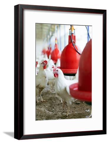 Organic Chicken Farming--Framed Art Print
