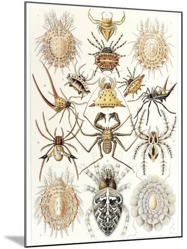 Arachnid Organisms, Artwork--Mounted Photographic Print