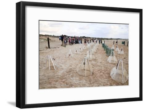 Green Turtles' Hatching Site, Israel--Framed Art Print