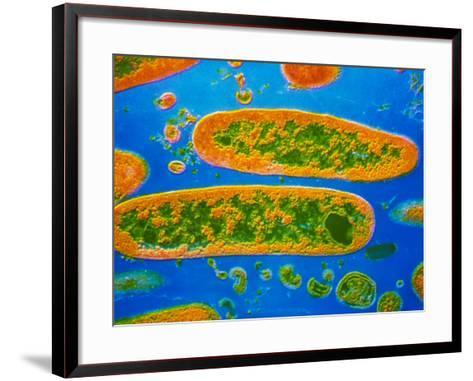 Coloured TEM of Yersinia Pestis Bacteria--Framed Art Print