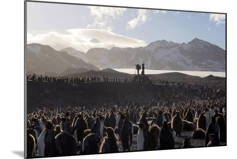 Penguin Breeding Colony Research-Charlotte Main-Mounted Photographic Print
