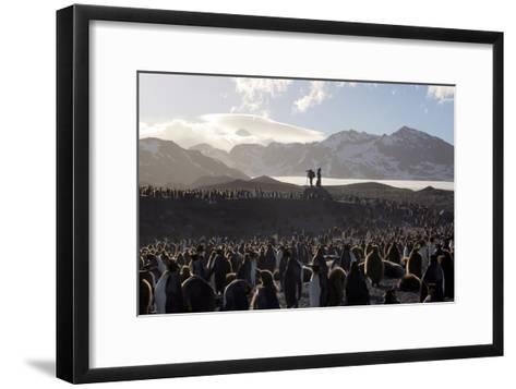 Penguin Breeding Colony Research-Charlotte Main-Framed Art Print