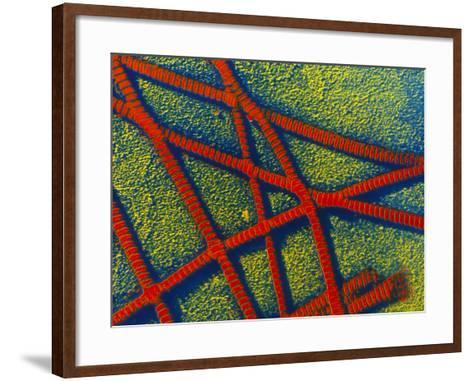 False-colour TEM of Collagen Fibrils--Framed Art Print