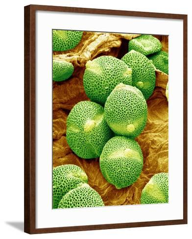 Cucumber Pollen, SEM-Susumu Nishinaga-Framed Art Print