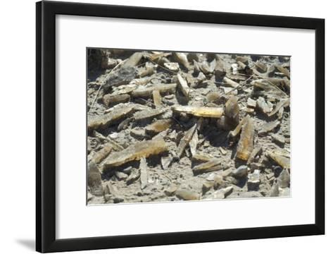 Selenite Crystals on a Dried Lake Bed-Louise Murray-Framed Art Print