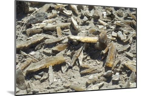 Selenite Crystals on a Dried Lake Bed-Louise Murray-Mounted Photographic Print