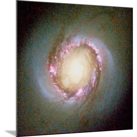 Star Birth In Galaxy NGC 4314--Mounted Photographic Print