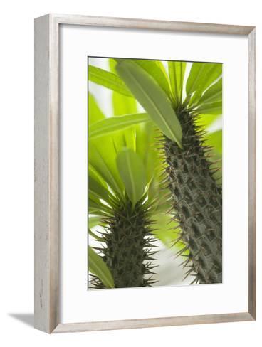 Pachypodium Lamerei-Maria Mosolova-Framed Art Print