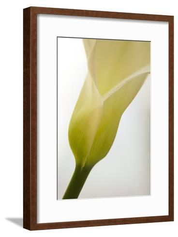 Calla Lily (Zantedeschia Aethiopica)-Maria Mosolova-Framed Art Print