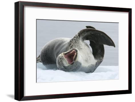 Leopard Seal-Louise Murray-Framed Art Print