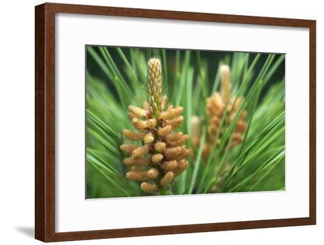 White Pine (Pinus Strobus)-Maria Mosolova-Framed Art Print