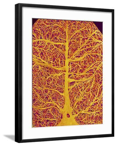 Rat Brain Blood Vessels, SEM-Susumu Nishinaga-Framed Art Print