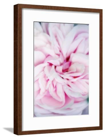 Rose Flower (Rosa Sp.)-Maria Mosolova-Framed Art Print