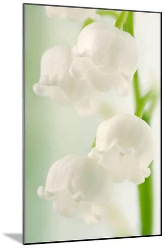 Lily of the Valley (Convallaria Majalis)-Maria Mosolova-Mounted Photographic Print