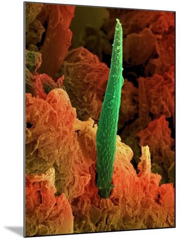 Cannabis Leaf, SEM-David McCarthy-Mounted Photographic Print