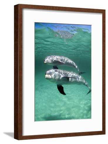 Bottlenose Dolphins-Louise Murray-Framed Art Print