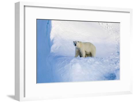Polar Bear Mother And Cub-Louise Murray-Framed Art Print