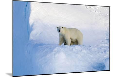 Polar Bear Mother And Cub-Louise Murray-Mounted Photographic Print