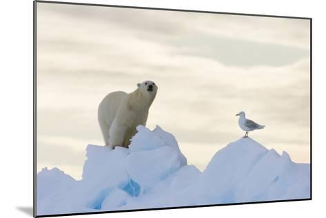 Polar Bear And Seagull-Louise Murray-Mounted Photographic Print