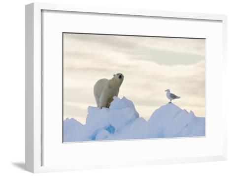 Polar Bear And Seagull-Louise Murray-Framed Art Print