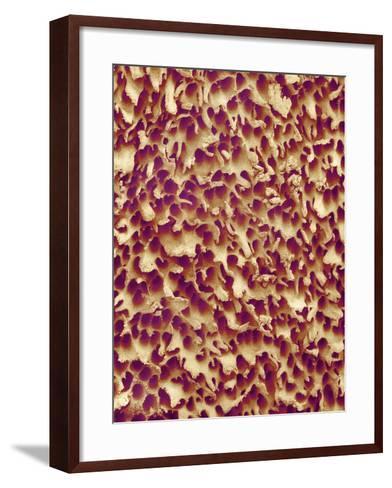 Mushroom Surface, SEM-Susumu Nishinaga-Framed Art Print