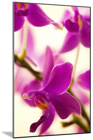 Phalaenopsis Flying Fire 'Sweetheart'-Maria Mosolova-Mounted Photographic Print