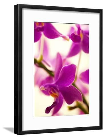 Phalaenopsis Flying Fire 'Sweetheart'-Maria Mosolova-Framed Art Print