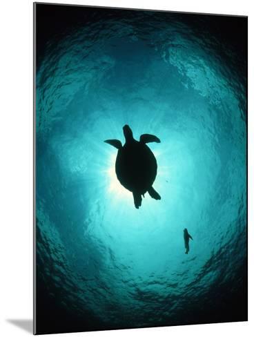 Turtle Swimming-Matthew Oldfield-Mounted Photographic Print