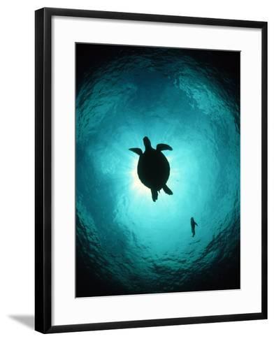 Turtle Swimming-Matthew Oldfield-Framed Art Print
