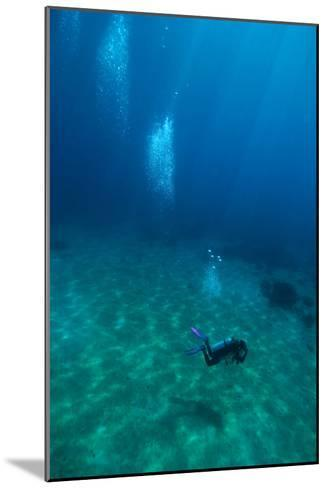 Scuba Diving-Matthew Oldfield-Mounted Photographic Print