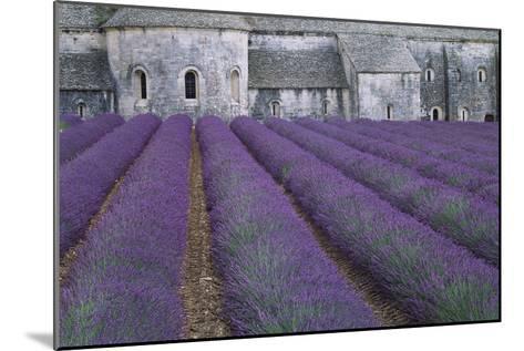 Field of Lavender-David Nunuk-Mounted Photographic Print