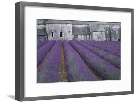 Field of Lavender-David Nunuk-Framed Art Print