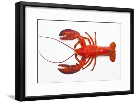 Atlantic Lobster-David Nunuk-Framed Art Print
