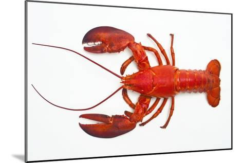 Atlantic Lobster-David Nunuk-Mounted Photographic Print