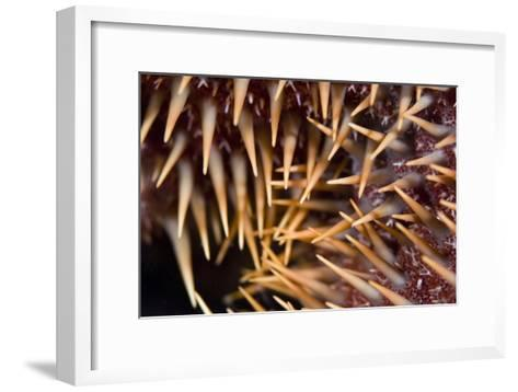 Poisonous Spines of a Crown of Thorns-Matthew Oldfield-Framed Art Print