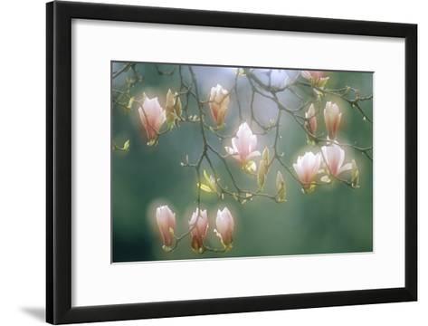 Magnolia In Flower-David Nunuk-Framed Art Print