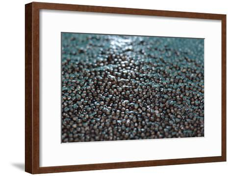 Sturgeon Farming In Russia-Ria Novosti-Framed Art Print