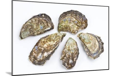 Pacific Oysters-David Nunuk-Mounted Photographic Print