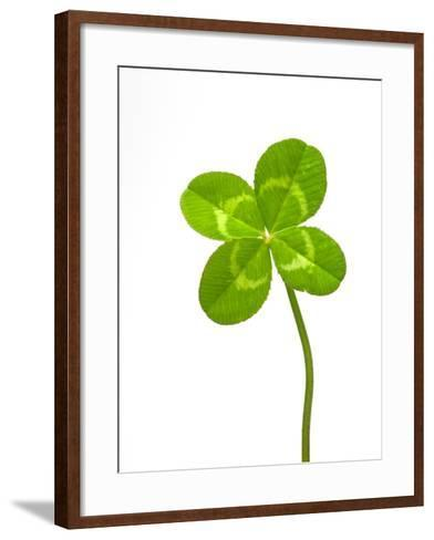 Four-leaf Clover-David Nunuk-Framed Art Print