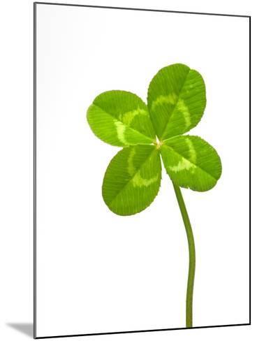Four-leaf Clover-David Nunuk-Mounted Photographic Print
