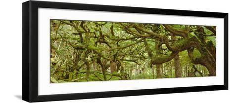 Moss-covered Trees-David Nunuk-Framed Art Print