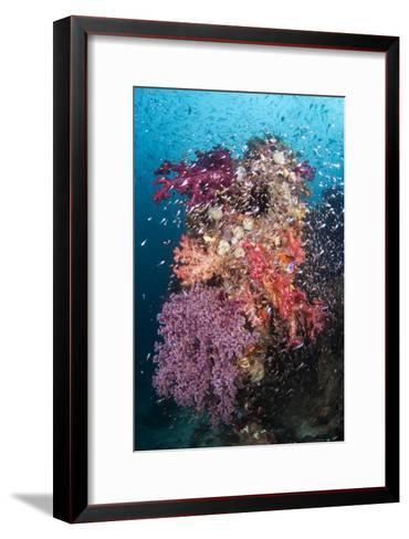 Coral Reef Community-Matthew Oldfield-Framed Art Print