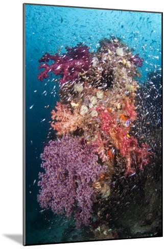 Coral Reef Community-Matthew Oldfield-Mounted Photographic Print